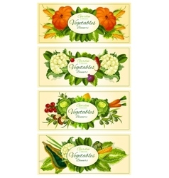 Farm and garden vegetables banners vector