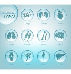 Organs icons vector