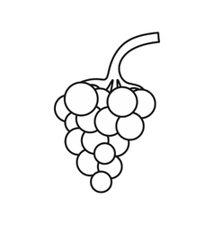 Bunch of grapes icon outline style vector image