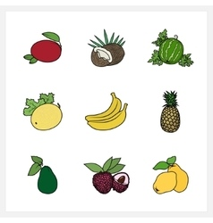 Tropical exotic fruit vector