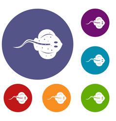 Stingray fish icons set vector