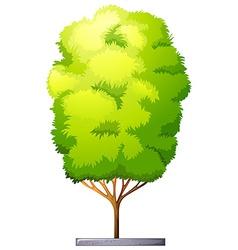 A tall houseplant vector
