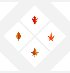 Flat icon maple set of aspen frond foliage and vector