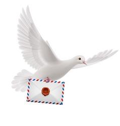 Dove white vector image