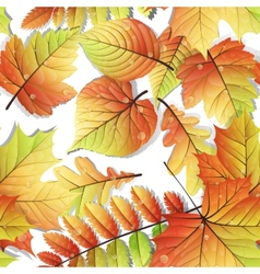 Colorful autumn seamless leaves isolated EPS 10 vector image
