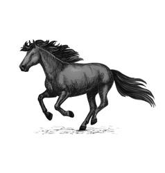 Black wild horse running on races sketch vector