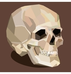 skull on the brown background vector image