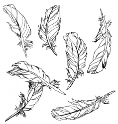 artistic feathers vector image vector image