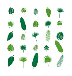 set of tropical leaves nature elements for your vector image