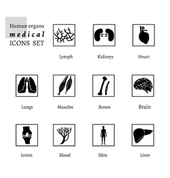 Organs icons vector
