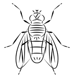 Doodle hand drawn fly vector