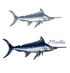 Marlin fish isolated sketch icon vector