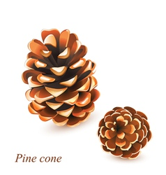 pine cones vector image vector image