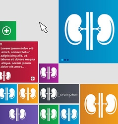 Kidneys icon sign buttons modern interface website vector