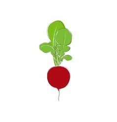 Radish vegetable standing isolated on white vector