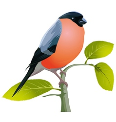 beautiful bird vector image vector image