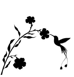 hummingbird and flower silhouettes vector image
