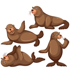 Sea lion in four poses vector
