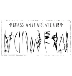 Set of ears and grass vector image