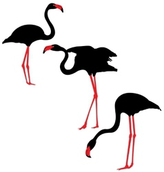 Flamingo silhouettes vector