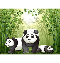 Three big bears at the rainforest vector image
