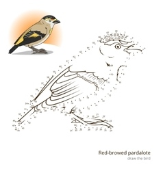 Red browed pardalote bird learn to draw vector