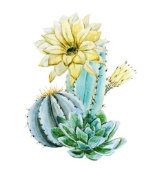 Watercolor cactus vector image