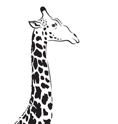 image of an giraffe head vector image
