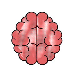 Brain human organ vector