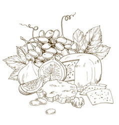 Pile of hand drawn cheese grape and fig vector