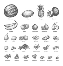 Sketch doodle hand-drawn set fruit vector