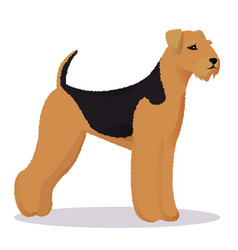 airedale dog vector image