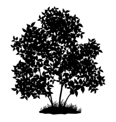 Lilac tree and grass silhouette vector image