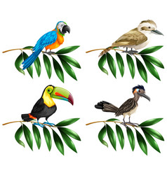 four types of wild birds on branch vector image