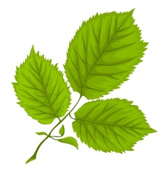 Branch with green leaves on vector