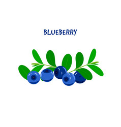 Ripe juicy blueberry on a white background vector
