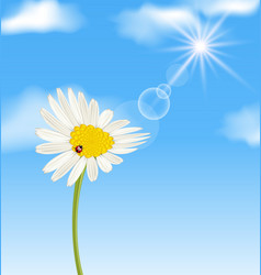 Chamomile flower and blue sky with clouds vector