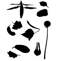 Collection of silhouettes of vegetables vector image
