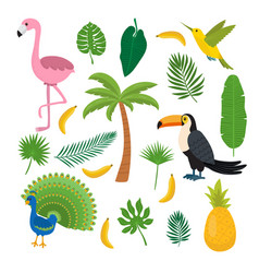 Toucan hummingbird and flamingo summer tropical vector