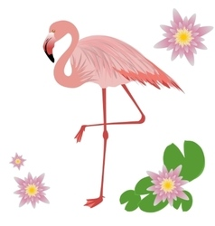 a Flamingo vector image