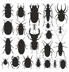 Beetles silhouette set vector image