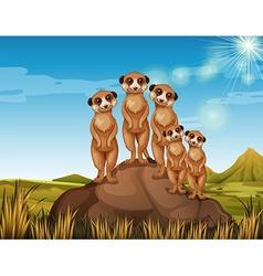 Meerkats standing on rock vector image vector image