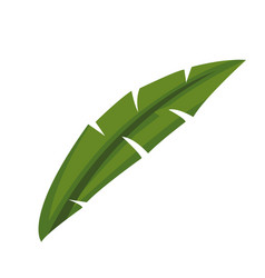 Natural leave palm foliage tropical image vector
