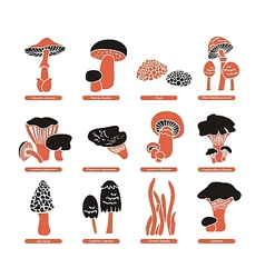 Edible mushrooms set vector