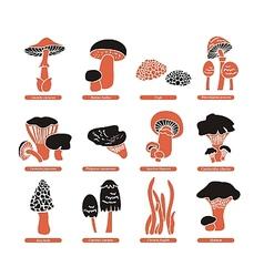 Edible Mushrooms Set vector image