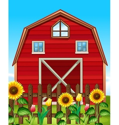 Red barn and sunflower field vector