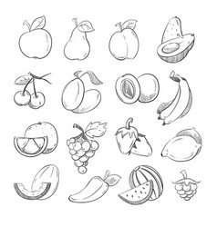 sketch doodle hand drawn fresh and juicy fruits vector image vector image