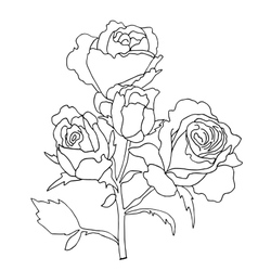 Hiqh quallity rose for coloring vector