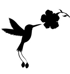 Hummingbird and flower silhouettes vector