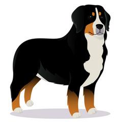 bernes mountain dog vector image vector image